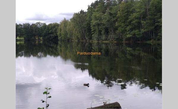 SUMAŽINTA KAINA 34900 € (80 €/a)  !!!  Bučeliškės kaime prie Bučeliškės ežero parduodamas 4,365 ha žemės ūkio paskirties sklypas, suformuotas, atliekant kadastrinius matavimus. Priklauso 120 m skaidraus Bučeliškės ežero pakrantės