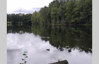 258, SUMAŽINTA KAINA 34900 € (80 €/a)  !!!  Bučeliškės kaime prie Bučeliškės ežero parduodamas 4,365 ha žemės ūkio paskirties sklypas, suformuotas, atliekant kadastrinius matavimus. Priklauso 120 m skaidraus Bučeliškės ežero pakrantės